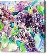 First Lilac. Acrylic Print