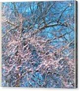 First Snow At Dawn Acrylic Print