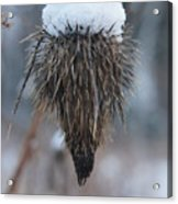 First Snow On The Thistle Acrylic Print