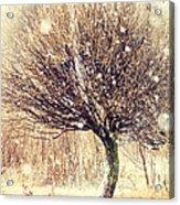 First Snow. Snow Flakes Acrylic Print