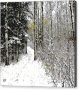 First Snowfall Acrylic Print