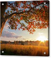 First Touch Of Autumn Acrylic Print