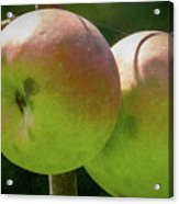 First Year Of Apples 0922pa Acrylic Print