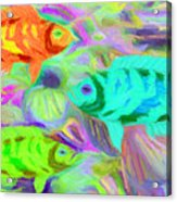 Fish 3 Acrylic Print