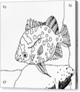 Fish And Rock Acrylic Print