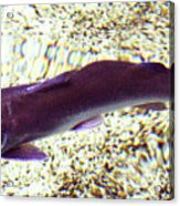 Fish In Water Acrylic Print