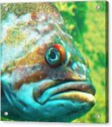 Fish Looking At You Acrylic Print
