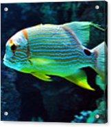 Fish No.3 Acrylic Print