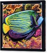 Fish Number 2 Acrylic Print