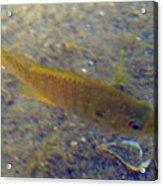 Fish Sandy Bottom Acrylic Print