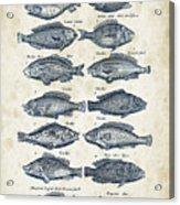 Fish Species Historiae Naturalis 08 - 1657 - 13 Acrylic Print
