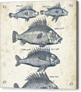 Fish Species Historiae Naturalis 08 - 1657 - 16 Acrylic Print