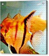 Fish Tank Acrylic Print