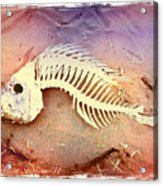 Fishbones Acrylic Print