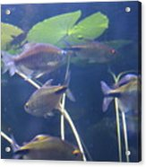 Fishes Acrylic Print