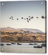 Fishing Boats And Blue Herons Acrylic Print