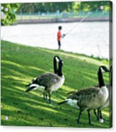 Fishing With The Geese Acrylic Print