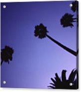 Five And A Half Palm Trees Acrylic Print