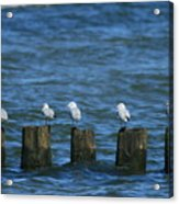 Five Birds Acrylic Print
