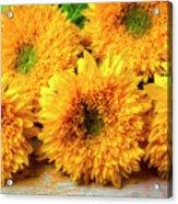 Five Exotic Sunflowers Acrylic Print
