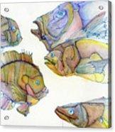 Five Fading Fish Acrylic Print