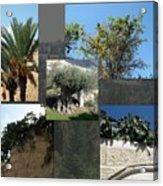 Five Fruit Of Israel Acrylic Print