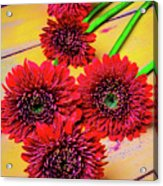 Five Red Dasies Acrylic Print