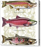 Five Salmon Species  Acrylic Print