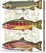 Five Trout Panel Acrylic Print by JQ Licensing