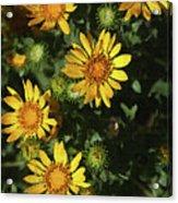 Five Yellow Flowers  Acrylic Print