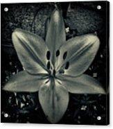 Fl08 Acrylic Print