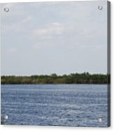 Fla Everglades Acrylic Print