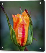 Flame Rose Acrylic Print