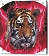 Flame Tiger Acrylic Print