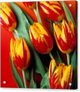 Flame Tulips Acrylic Print by Garry Gay
