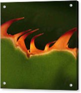 Flaming Aloe Acrylic Print