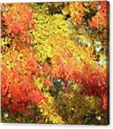 Flaming Autumn Leaves Art Acrylic Print