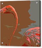 Flaming Flamingo-d  Acrylic Print