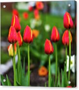 Flaming Flowers  Acrylic Print