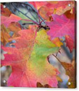 Flaming Oak Acrylic Print