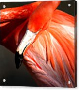 Flamingo - Over The Shoulder Acrylic Print