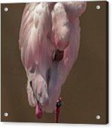 Flamingo -2 Acrylic Print