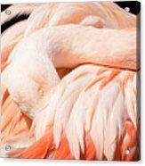 Flamingo Abstract Acrylic Print