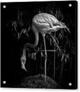 Flamingo Classic Bw Acrylic Print