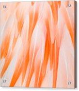 Flamingo Closeup Acrylic Print