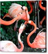 Flamingo Dance Acrylic Print