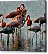 Flamingo Family Acrylic Print