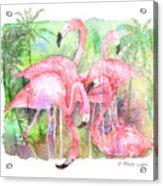 Flamingo Five Acrylic Print