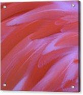 Flamingo Flow 2 Acrylic Print