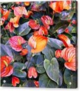Flamingo Flower Bed Acrylic Print
